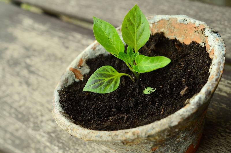 Биогумус: универсальное экологически чистое комплексное удобрение