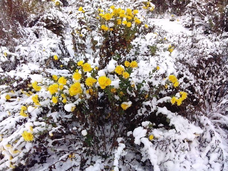 15 растений, которые обязательно нужно укрывать на зиму