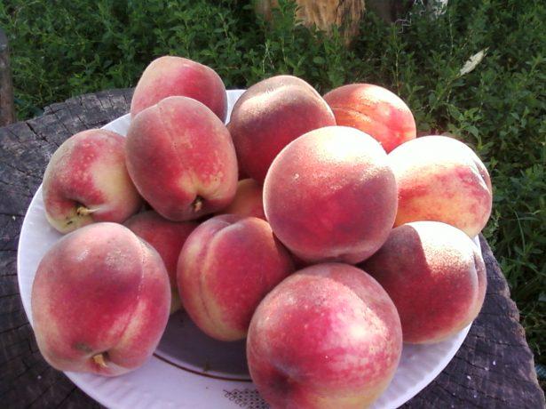 Плоды персика Воронежский кустовой