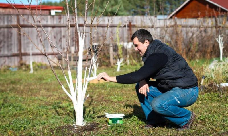Какие деревья не белят и что с ними делать
