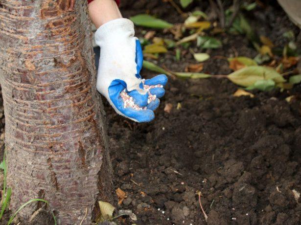 Подкормка плодового дерева