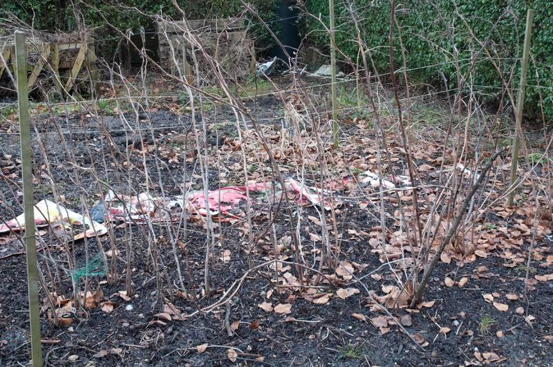 Незачем резать и укрывать: зачем и где садоводы оставляют в зиму все побеги и поросль малины
