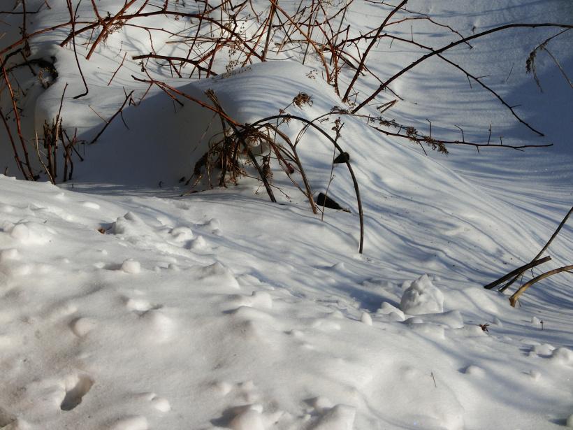 Малина под снегом
