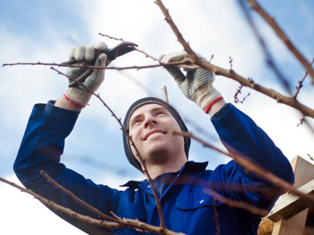 Как ухаживать за взрослым деревцем?