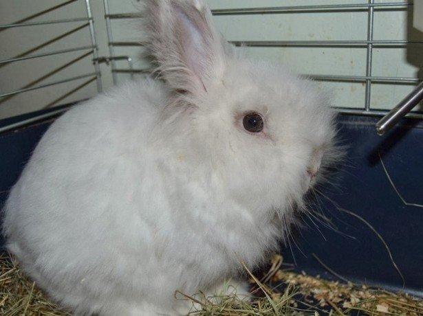 Фотография кролика декоративного