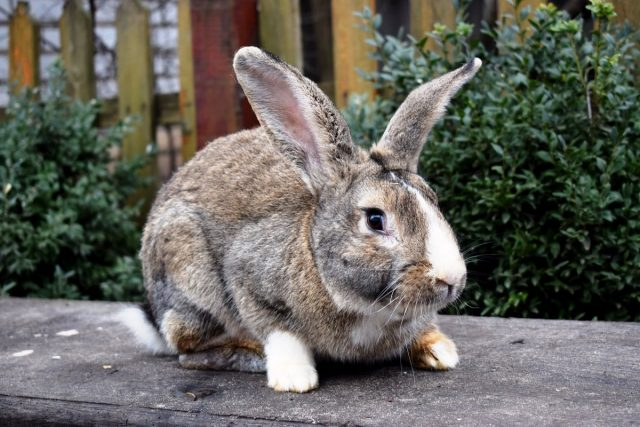 Разведение кроликов для начинающих — породы, уход, получение потомства