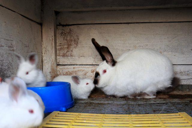 У самки с крольчатами обязательно должна быть вода У самки с крольчатами обязательно должна быть вода