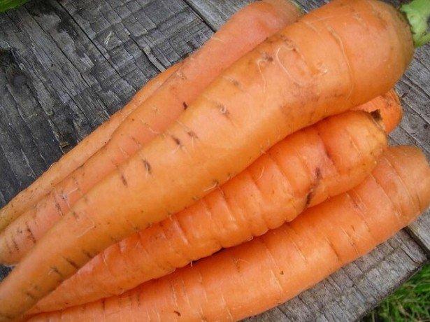 На фото морковь