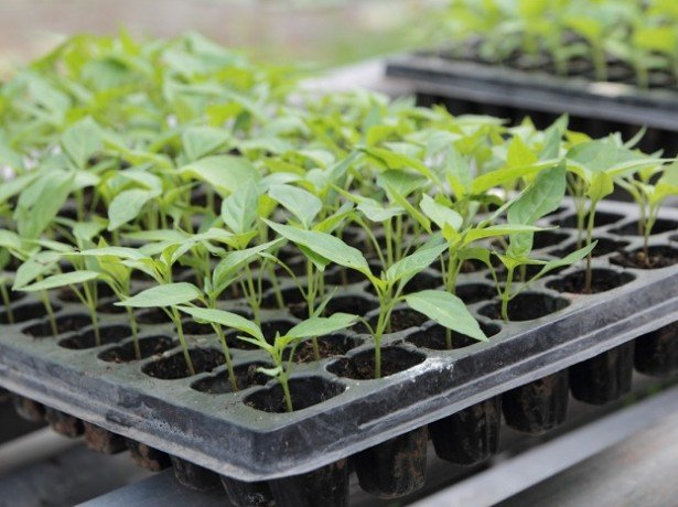 На фото тара для растений