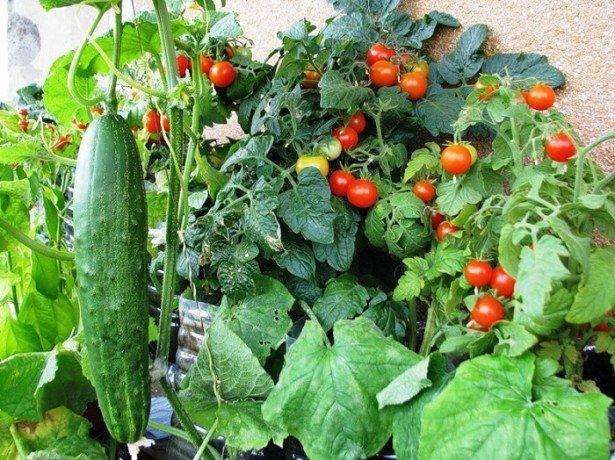 На фото огород на балконе