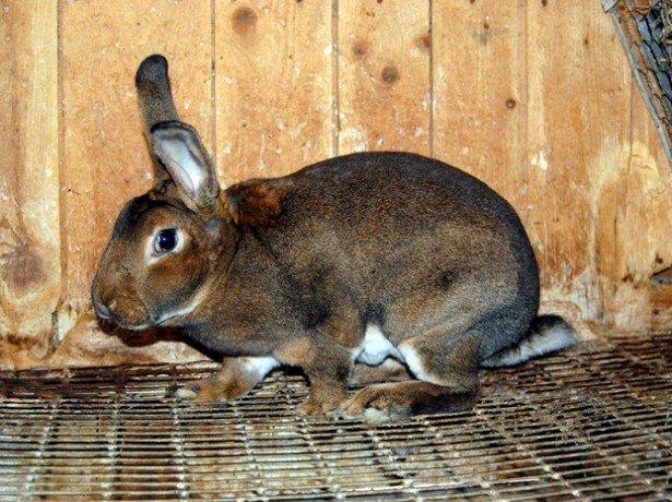 На фотографии кролик