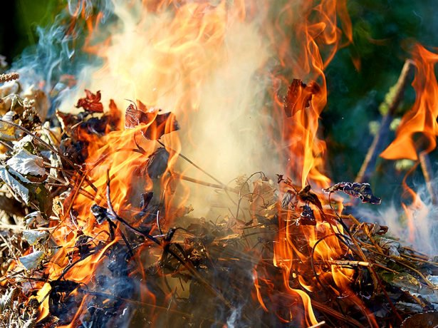 Сжигание листвы и побегов малины
