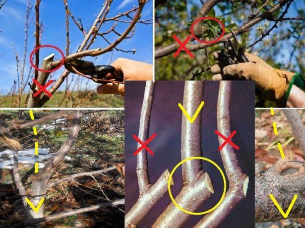 Техника обрезания ветвей деревьев