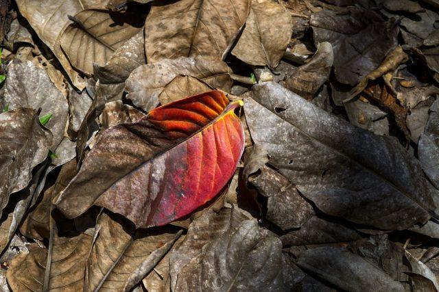Опавшая листва, перегнивая за зиму, становится частью верхнего слоя почвы и при этом существенно улучшает её структуру