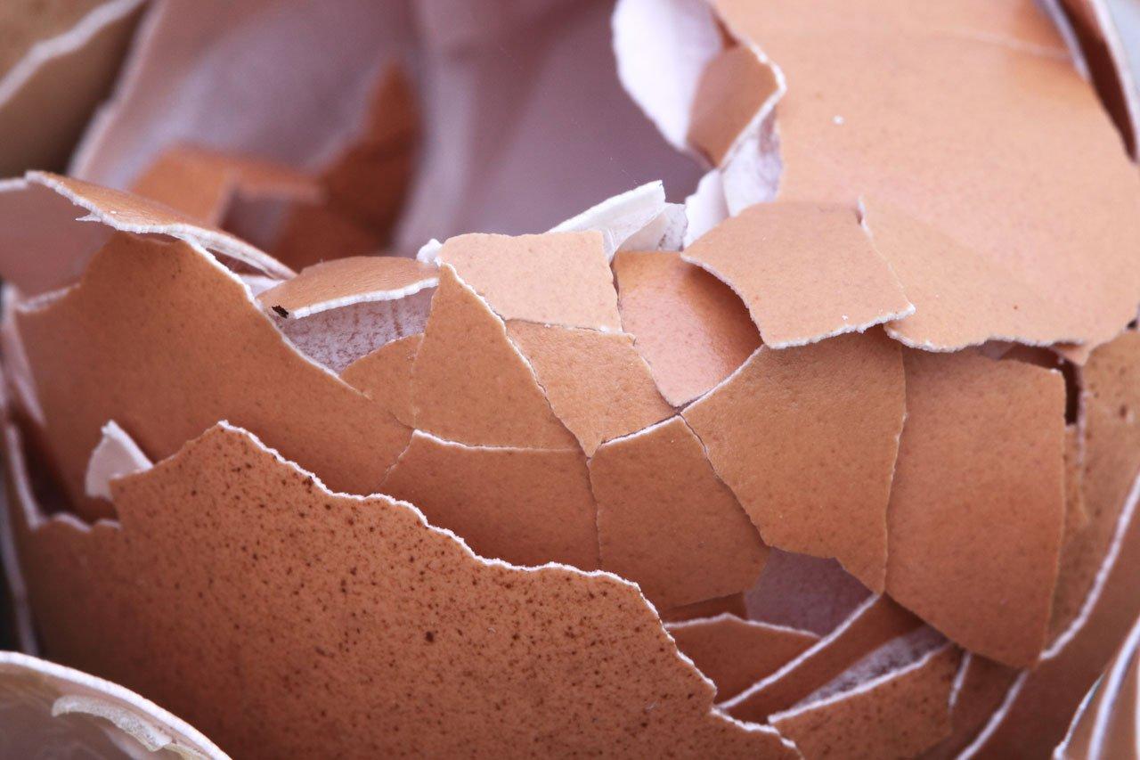 Удобрение из яичной скорлупы: польза, приготовление, применение