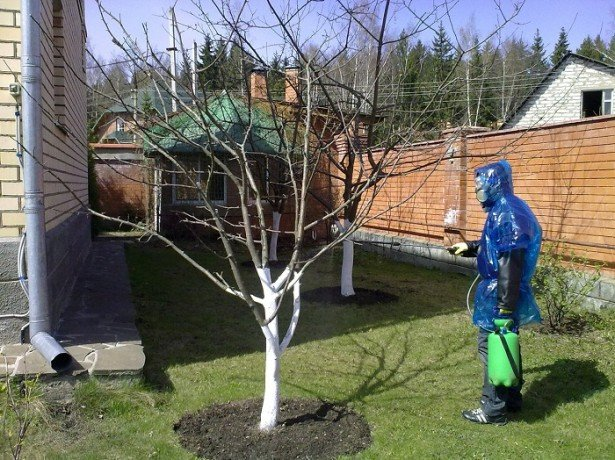 Фото обработки дерева вишни