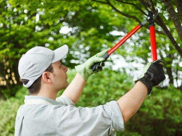 Фото обрезки вишни