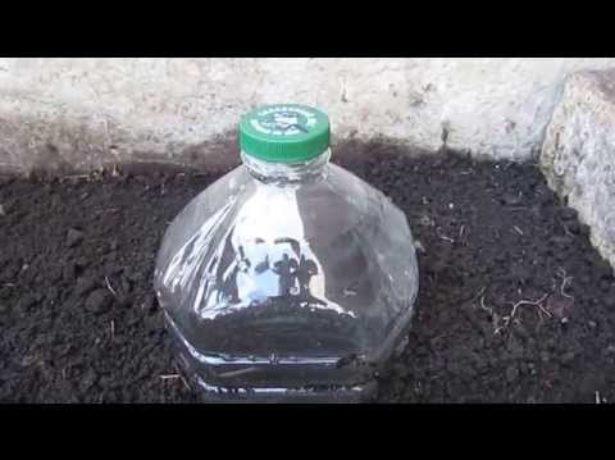 Укрытие рассады пластиковой бутылкой