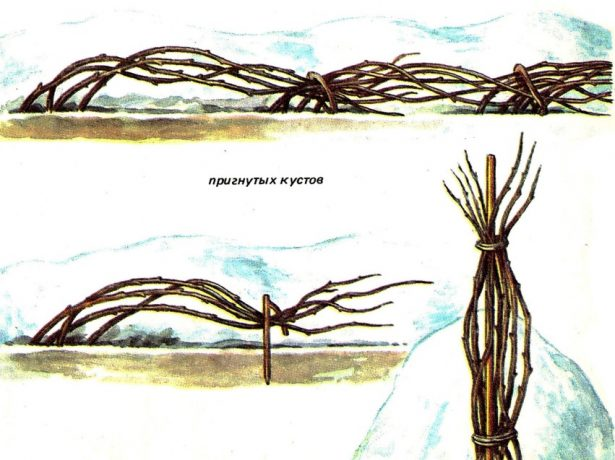 урытие малины на зиму
