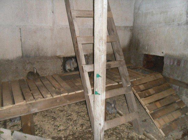 Фото разведения кроликов в ямах
