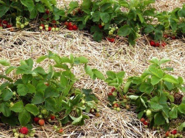 Лето – контроль за состоянием растений и сбор урожая