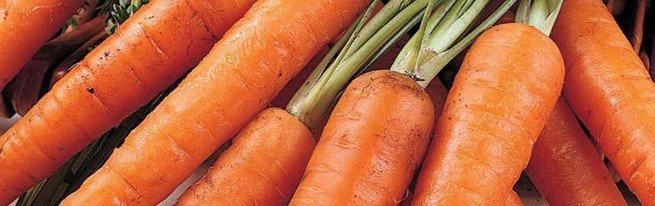 Весенняя и осенняя посадка моркови – в чем разница, и что предпочесть?