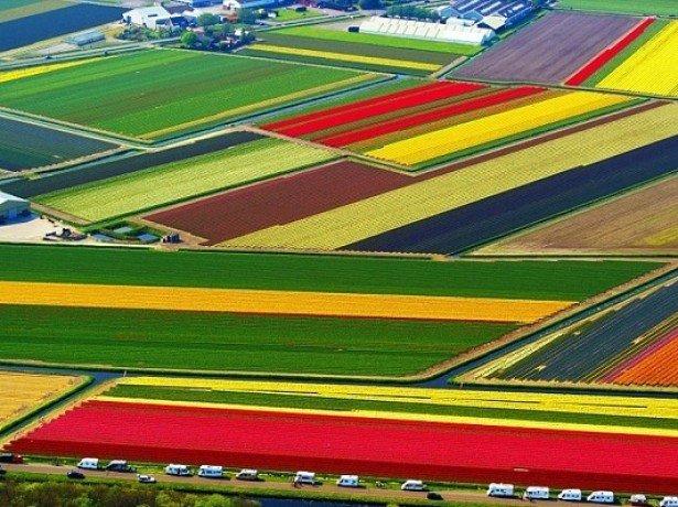 На фото поле тюльпанов