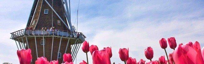 Восхитительные тюльпаны Голландии - история голландских тюльпанов и популярные сорта