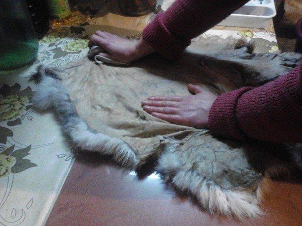 На фото выделка шкуры кролика