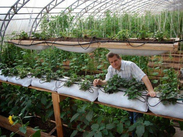 На снимке выращивание клубники в мешках