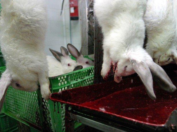 Фото забоя кроликов