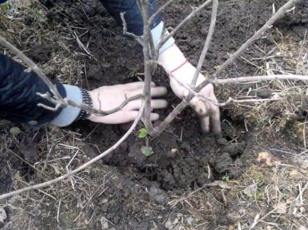 Заполнение ямы почвой