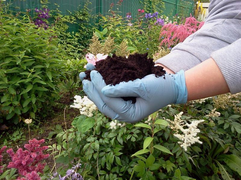 Кислотность почвы на участке: учимся определять и изменять самостоятельно